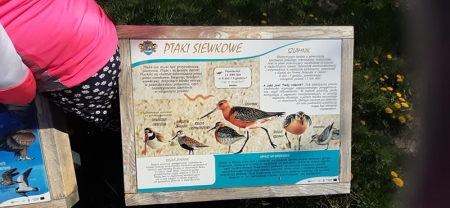 Obserwacje ptaków z Błękitną Szkołą w klasie 2 a